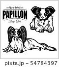 Papillon - vector set isolated illustration on white background 54784397