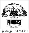 Pekingese - vector illustration for t-shirt, logo and template badges 54784399