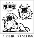 Pekingese - vector set isolated illustration on white background 54784400