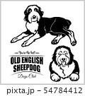 Old English Sheepdog - vector set isolated illustration on white background 54784412