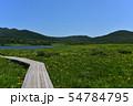 雄国沼のニッコウキスゲ群落と観察木道 54784795