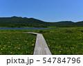 雄国沼のニッコウキスゲ群落と観察木道 54784796