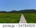 雄国沼のニッコウキスゲ群落と観察木道 54784920