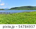 雄国沼のニッコウキスゲ群落と観察木道 54784937