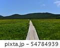 雄国沼のニッコウキスゲ群落と観察木道 54784939