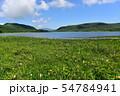 雄国沼のニッコウキスゲ群落と観察木道 54784941