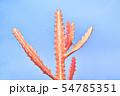 Coral neon cactus. Minimal Fashion art. Surreal 54785351