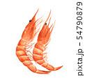 Red prawn or shrimp. Watercolor illustration. 54790879