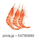 Red prawn or shrimp. Watercolor illustration. 54790880