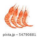 Red prawn or shrimp. Watercolor illustration. 54790881