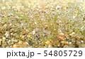 草(雨のしずく付き)3 54805729