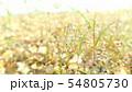 草(雨のしずく付き)2 54805730