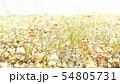 草(雨のしずく付き)1 54805731
