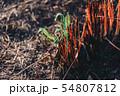 Young green sapling planting burning trees 54807812