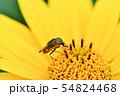 ツマグロキンバエ 54824468
