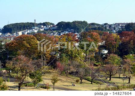 【東京都東大和市】10月狭山公園紅葉 54827604