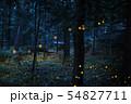 ヒメボタルの光跡を撮る 54827711