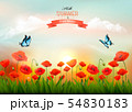 Summer nature background with red poppies and a 54830183