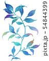 透明水彩 水彩画 木の葉 54844399
