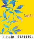 透明水彩 水彩画 木の葉 54844451