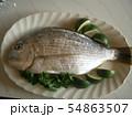 黒鯛 スダチ パセリ お皿 54863507