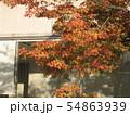 秋 窓辺のモミジ 54863939
