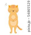 お辞儀をする猫 全身(手描き風) 54865529