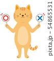 まるばつ札を持った猫 クイズ 全身(手描き風) 54865531