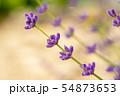 Lavender beautiful flowers 54873653
