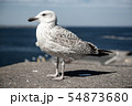 Sea gull at pier 54873680