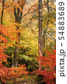 colorful scenery of a beech forest in autumn 54883689