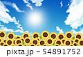 向日葵畑 54891752