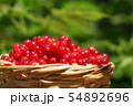 basket with currants 54892696