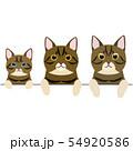 3世代の猫のボーダー 上半身 54920586