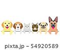 老犬と老猫たちのボーダー 上半身 54920589