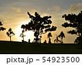 夕暮れ時の人物と木のシルエット 54923500