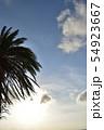 夕暮れ時の空とヤシの木 54923667