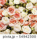 Floral background for your design, roses 54942300