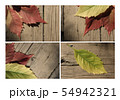 Autumn leaf collection for your design 54942321