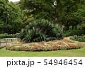 夏 東京 日比谷公園 洋式庭園  54946454