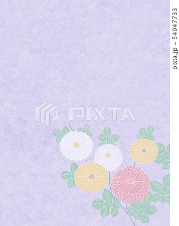 菊と和紙の背景画像 54947733