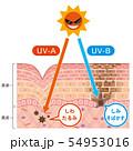肌図 紫外線ダメージ 54953016