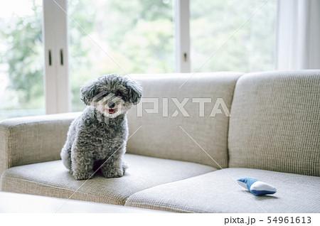 犬 ライフスタイル 54961613