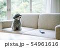 犬 ライフスタイル 54961616