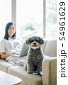 犬のいる暮らし 女性 ビジネス 54961629