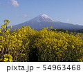 大石公園(河口湖湖畔) 54963468