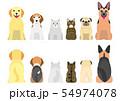 老犬と老猫たちのボーダー 全身 前後 54974078