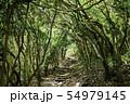 福岡県糸島市 芥屋の大門公園 森のトンネル 54979145