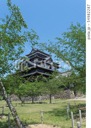 春の松江城 54982287