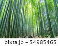 【神奈川県】鎌倉 報国寺の竹林 54985465